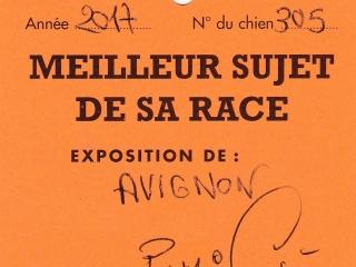 2017-Avignon-9
