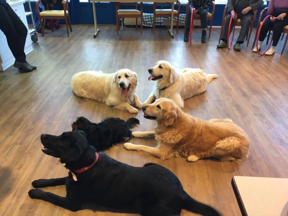 Novembre : Activités chiens visiteurs – Agility Obéissance